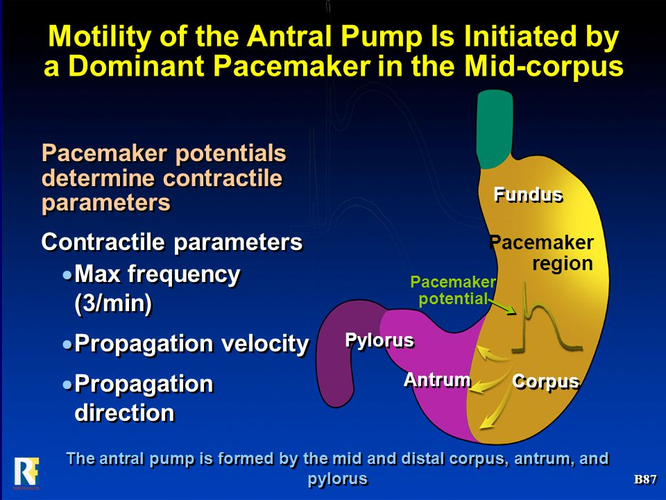 Motility of the Antral Pump Is Initiated by a Dominant Pacemaker in the Mid-corpus