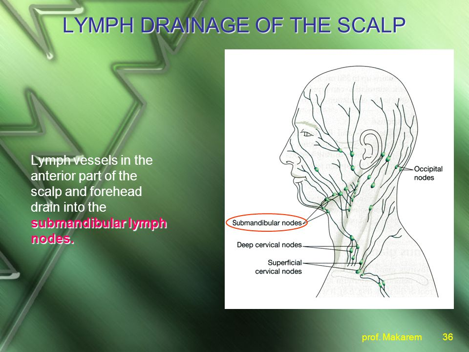lymph drainage of the scalp