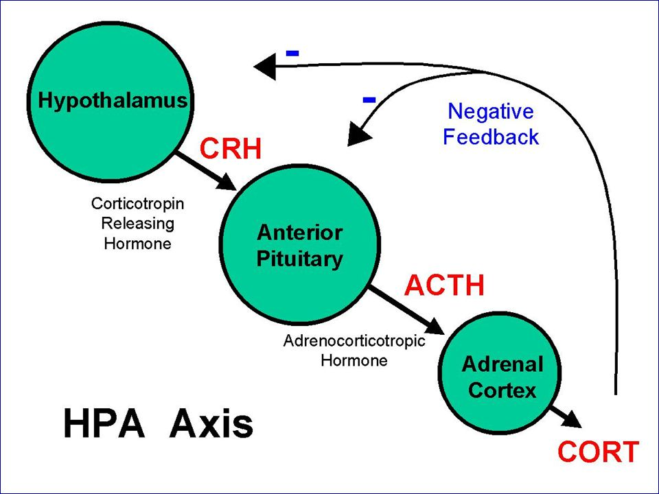 Corticosteroids Physical and metal stress are powerful stimulators of CRH which in turn increases ACTH and cortisol.