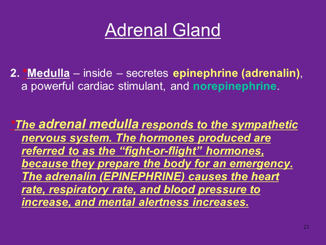 Adrenal Gland 2. *Medulla – inside – secretes epinephrine (adrenalin), a powerful cardiac stimulant, and norepinephrine.