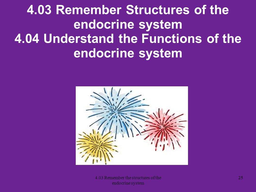4.03 Remember the structures of the endocrine system