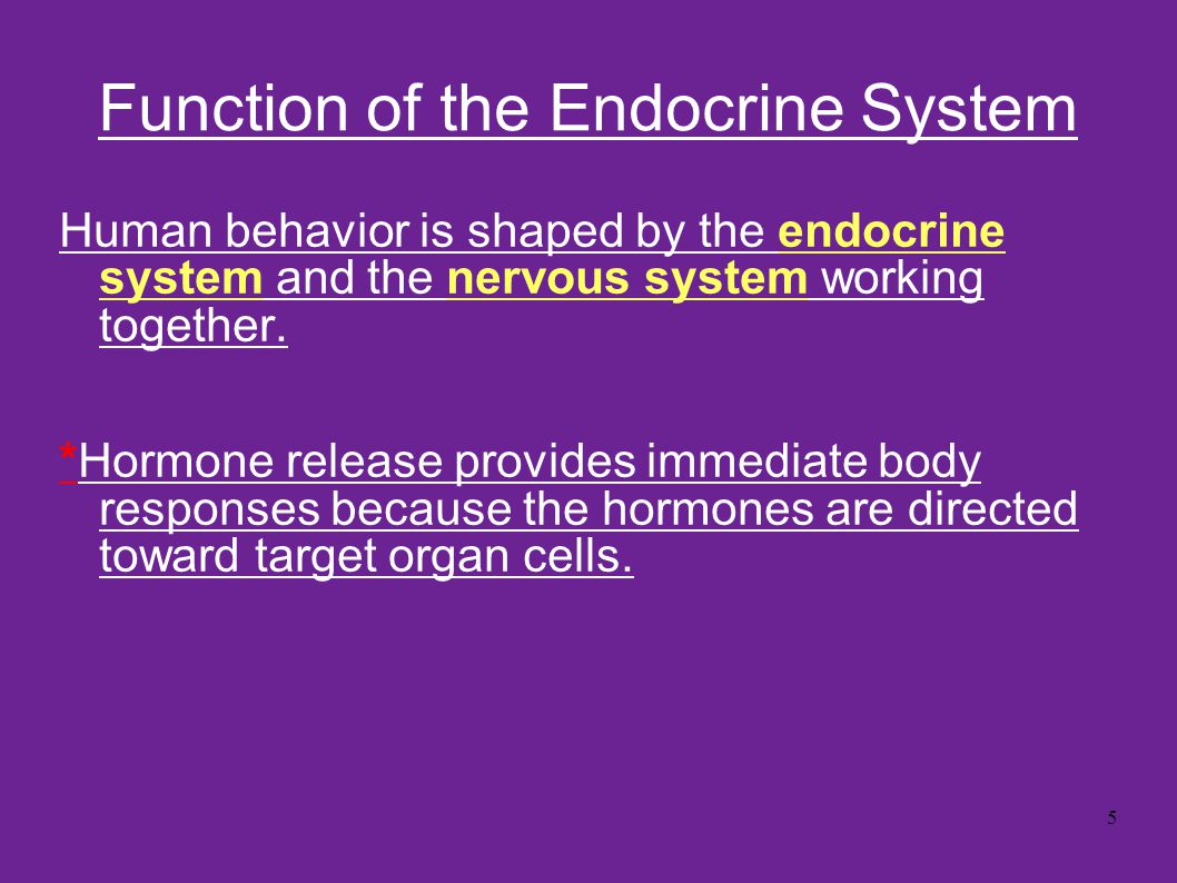 Function of the Endocrine System