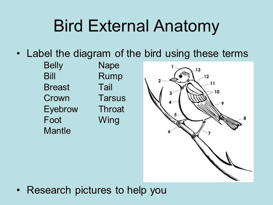 Class Aves: Birds GA State Game Bird – Bob White Quail - ppt video ...