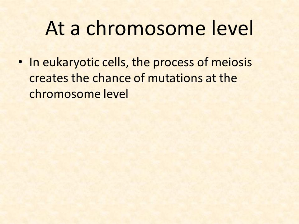 At a chromosome level In eukaryotic cells, the process of meiosis creates the chance of mutations at the chromosome level.