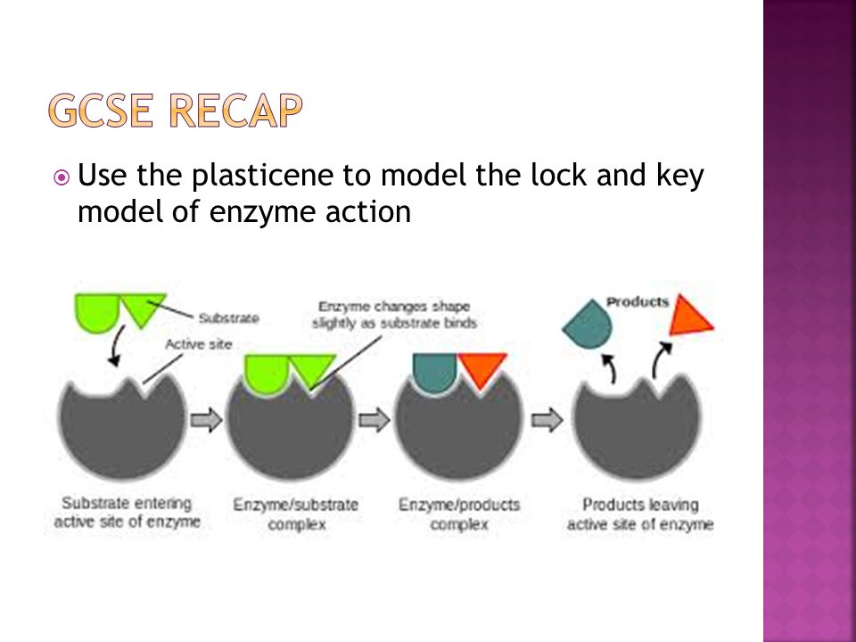 Enzymes lesson ppt video online download 5 gcse recap use the plasticene to model the lock and key model of enzyme action ccuart Image collections