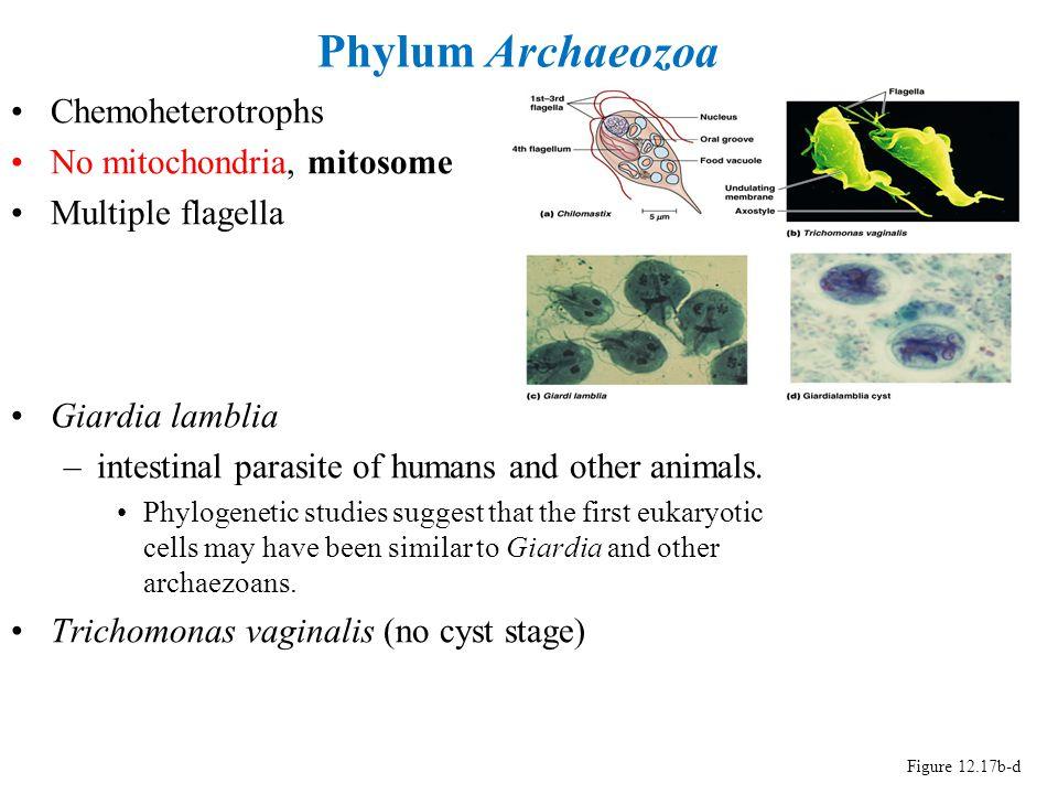classification of phylum protozoa pdf