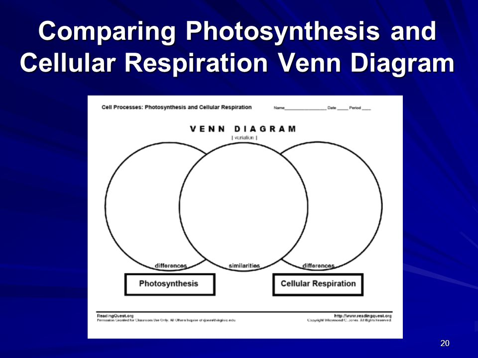 The processes of the cell ppt video online download comparing photosynthesis and cellular respiration venn diagram ccuart Choice Image