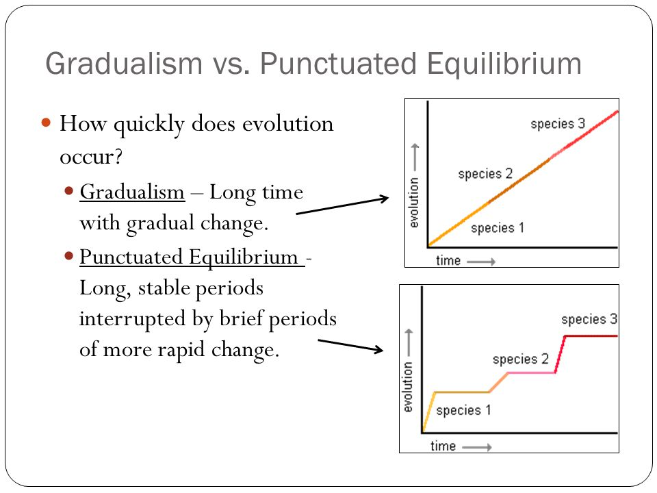 gradualism versus punctuationism 250000 free fast food versus home-cooked meals papers & fast food versus home-cooked meals essays at #1 essays bank since 1998 biggest and the best essays bank.