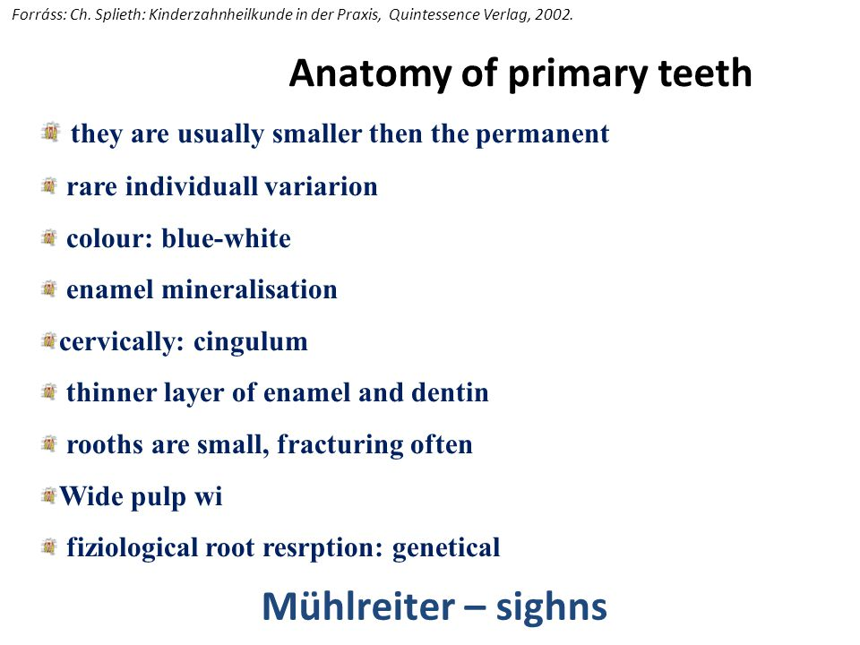 Tooth development, eruption and anatomy of primary teeth - ppt video ...