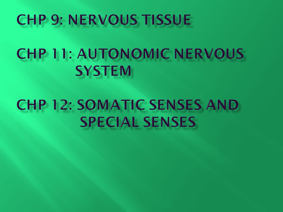 Chapter 9: Nervous Tissue Learning Objectives - ppt download