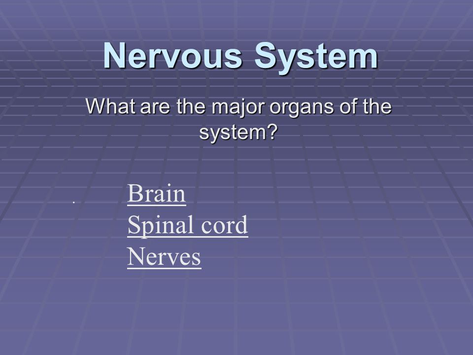 What are the major organs of the system