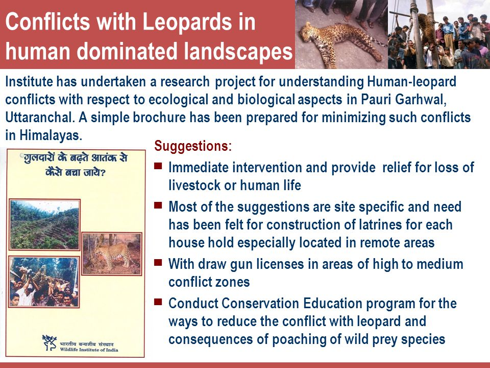 Conflicts with Leopards in human dominated landscapes