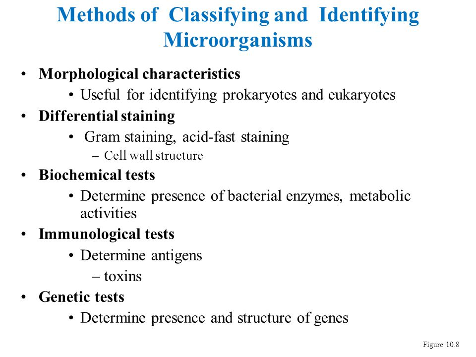 Identification of bacteria ppt