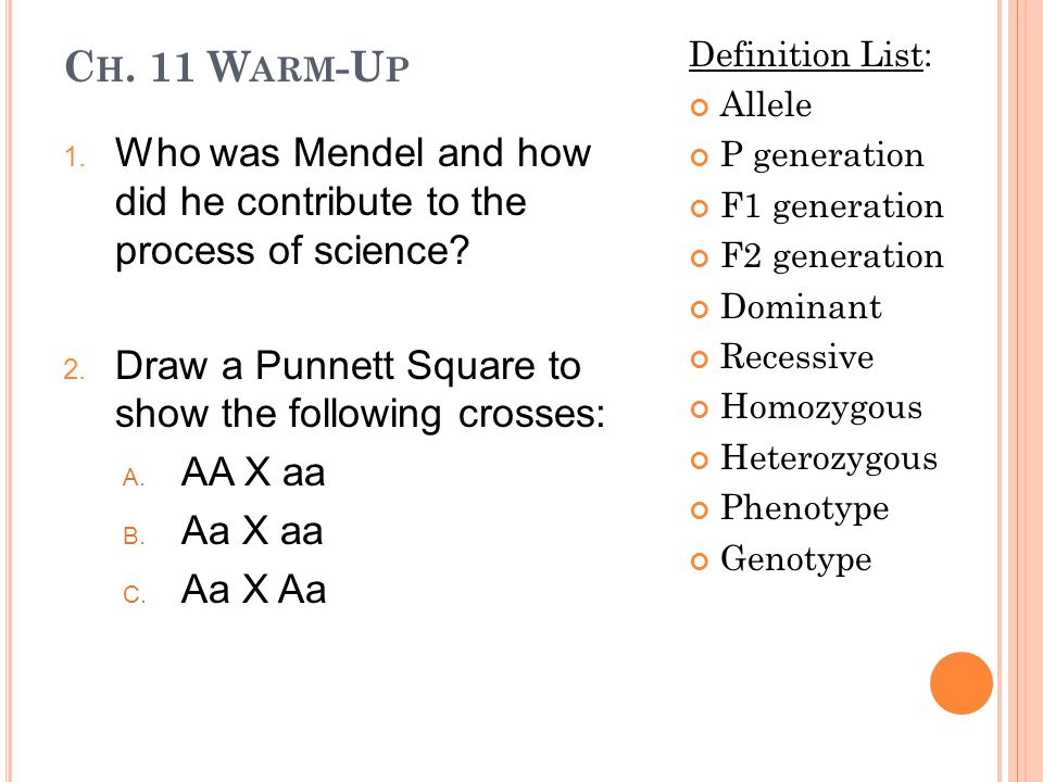 Ch  11 Warm-Up Definition List: Allele P generation F1