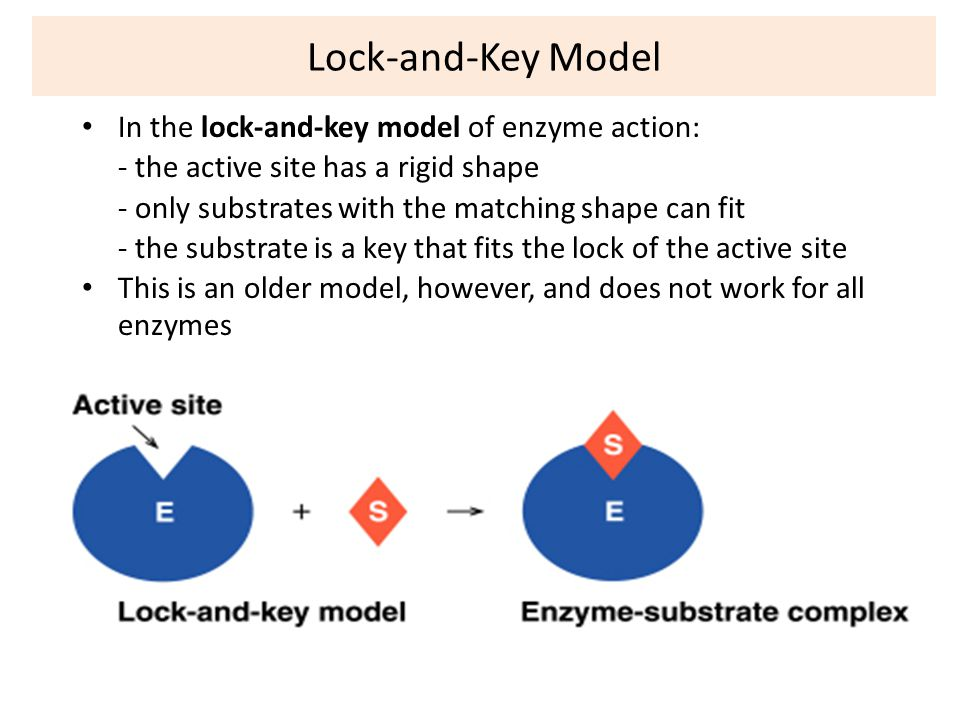 Enzyme Structure Classification And Mechanism Of Action Ppt Video