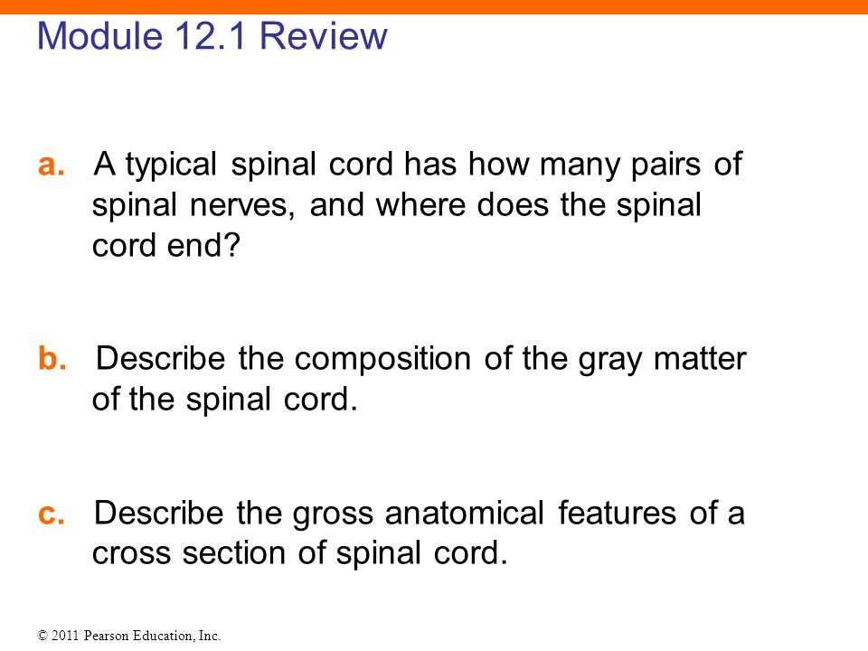 12 The Spinal Cord Spinal Nerves And Spinal Reflexes Ppt Download