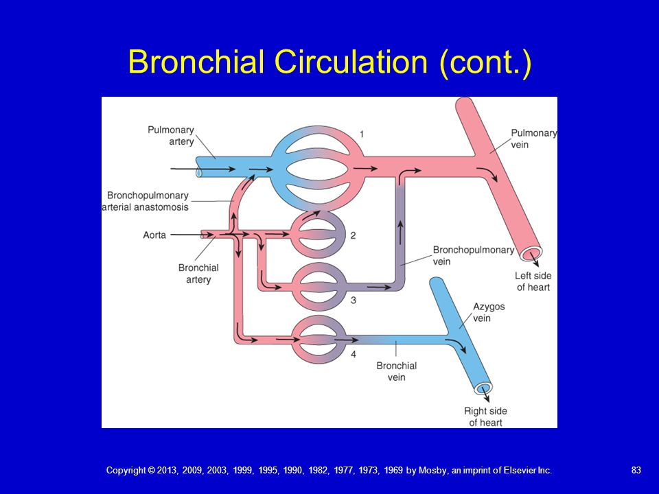 Bronchial Circulation Diagram - Application Wiring Diagram •