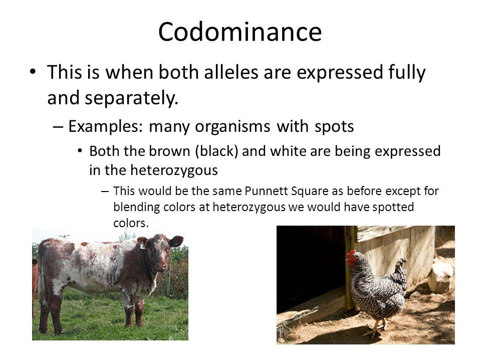 Codominance: definition & example | explainry.