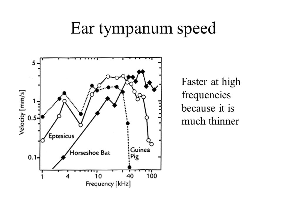 Hearing and echolocation - ppt video online download