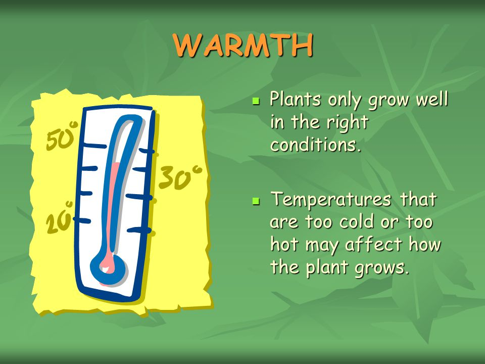 WARMTH Plants only grow well in the right conditions.