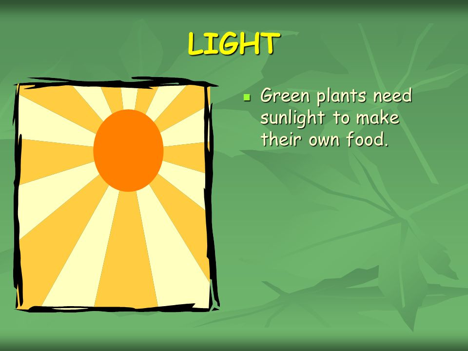 LIGHT Green plants need sunlight to make their own food.