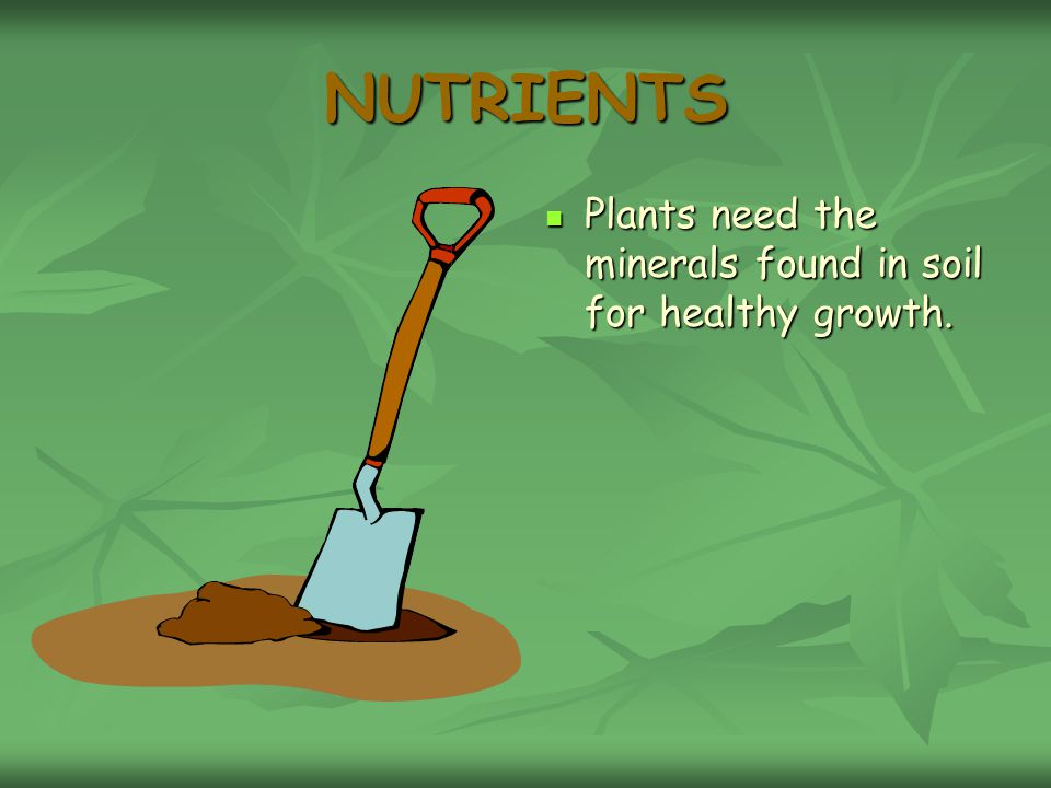 NUTRIENTS Plants need the minerals found in soil for healthy growth.