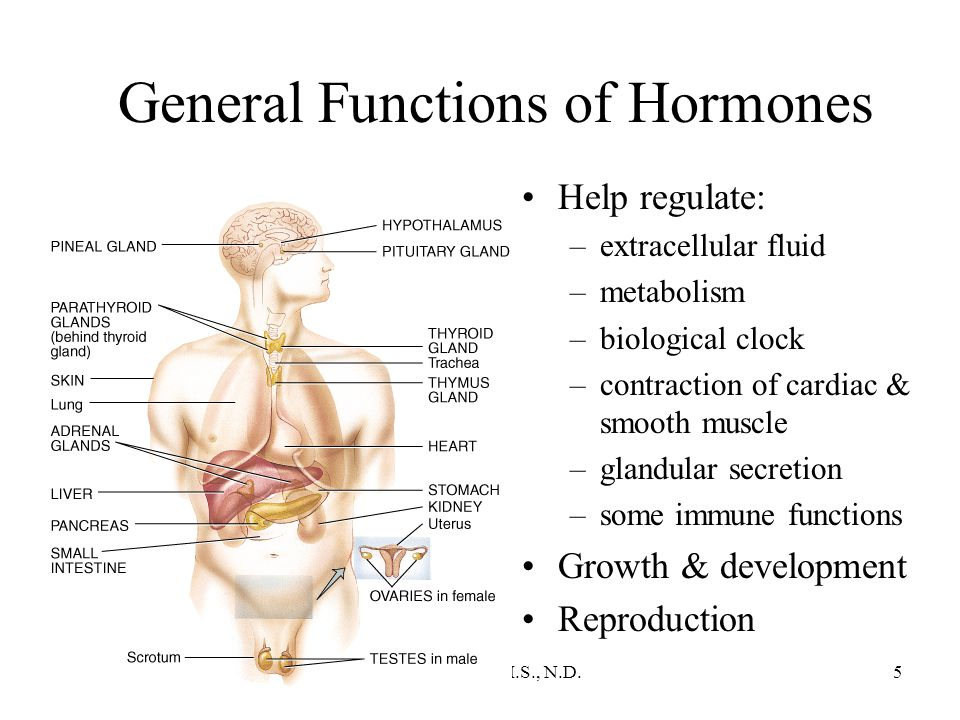 Chapter 18 The Endocrine System Ppt Download