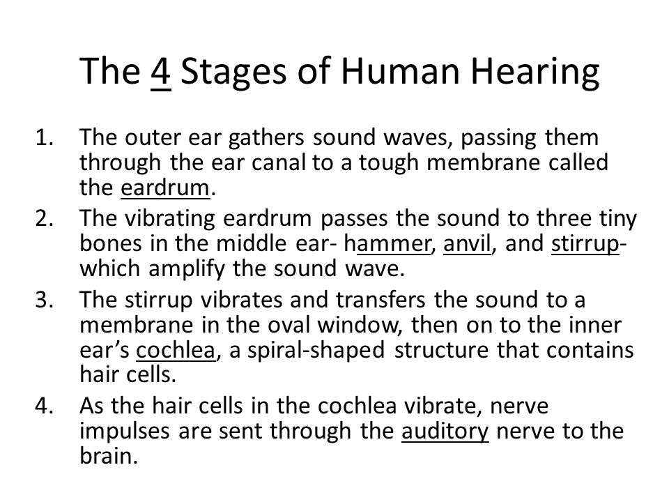 The 4 Stages of Human Hearing