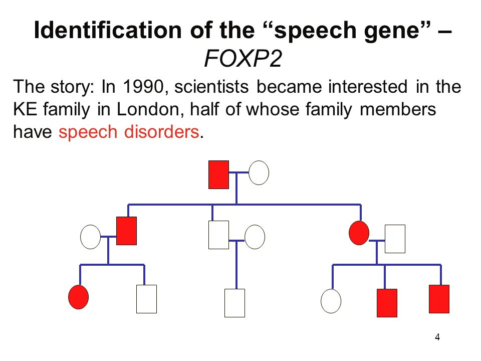foxp2 and speech case study