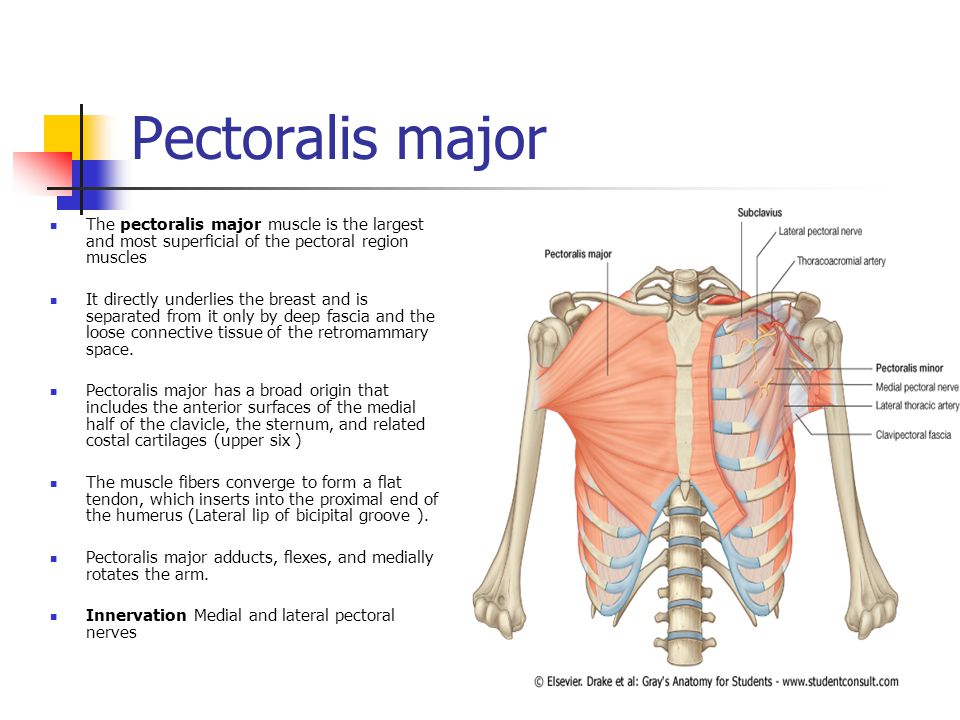 The Breast And Pectoral Region Ppt Download
