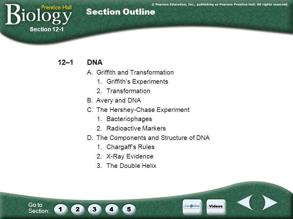 Interest Grabber Order Ppt Download. Section Outline 12 1 Dna A Griffith And Transformation. Worksheet. 12 1 Dna Worksheet Answers At Clickcart.co