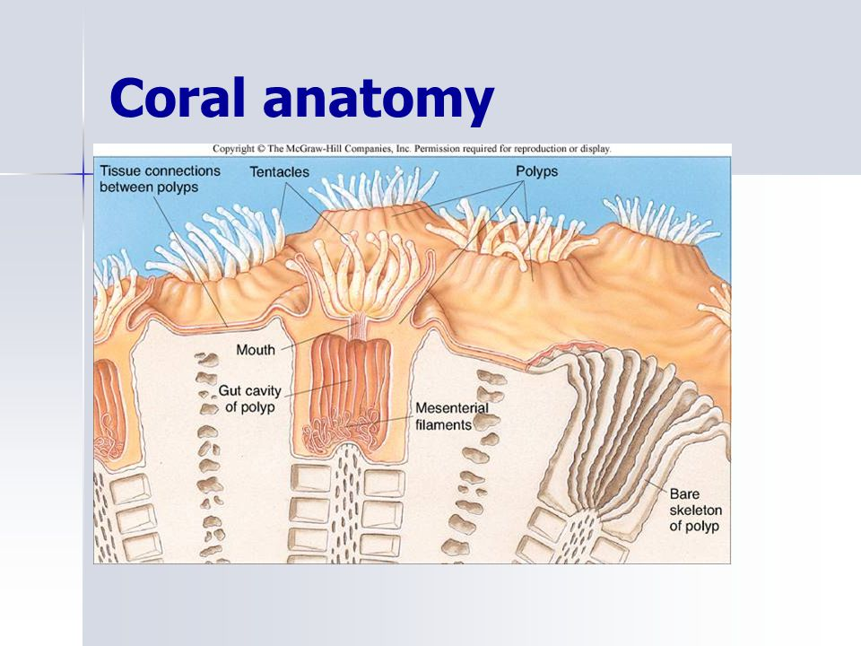 Marine Ecology Coral Reefs Ppt Video Online Download