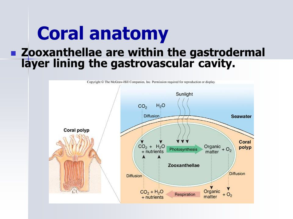 Marine Ecology Coral reefs. - ppt video online download