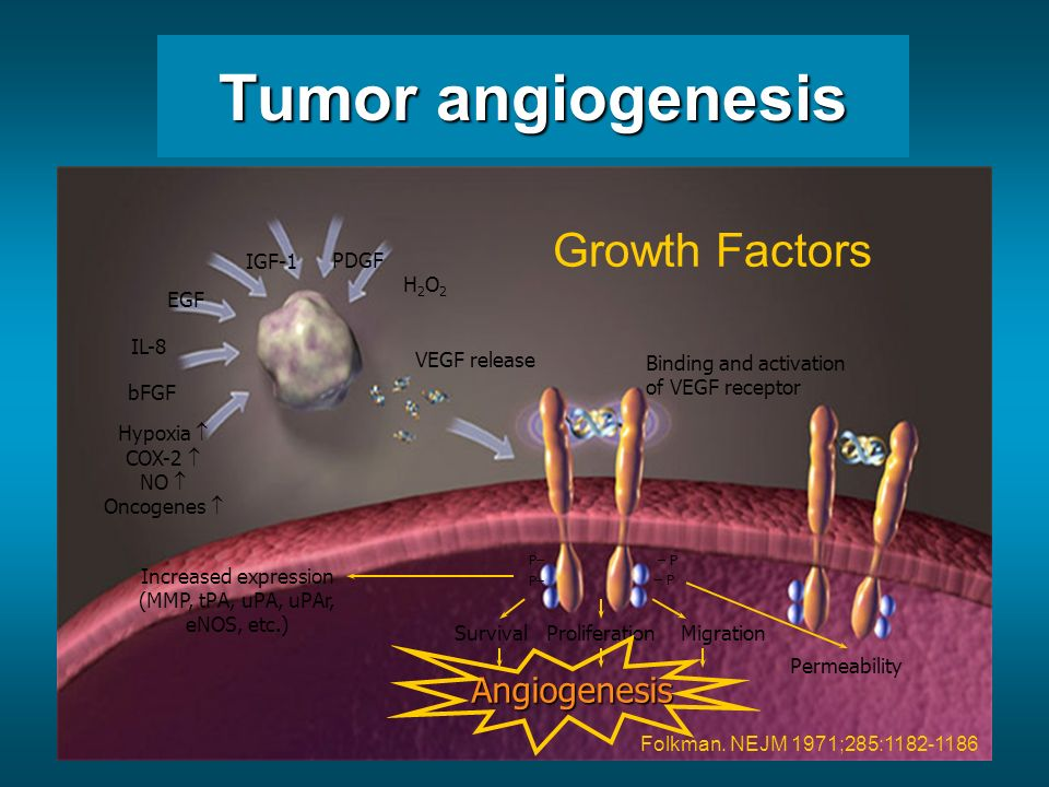 Tumor angiogenesis Growth Factors Angiogenesis EGF IGF-1 PDGF IL-8