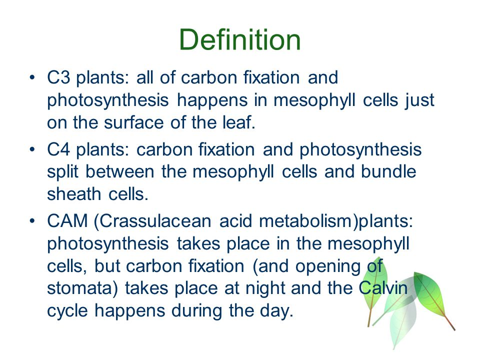 Photosynthesis C3, C4, CAM plants. - ppt video online download