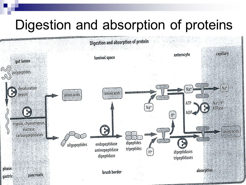 Proteins Ppt Download