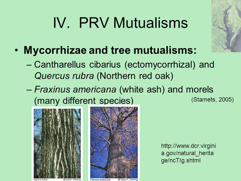 Mycelium in the PRV  - ppt video online download