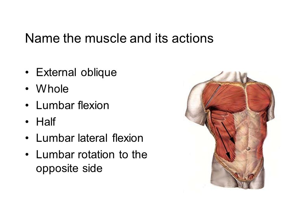 Muscles Of The Spinal Column Ppt Download