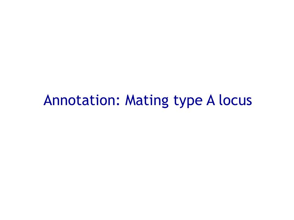 Annotation: Mating type A locus
