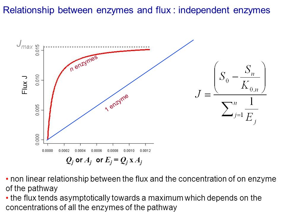 Relationship between enzymes and flux : independent enzymes