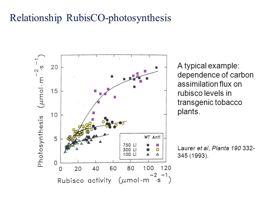 Relationship RubisCO-photosynthesis