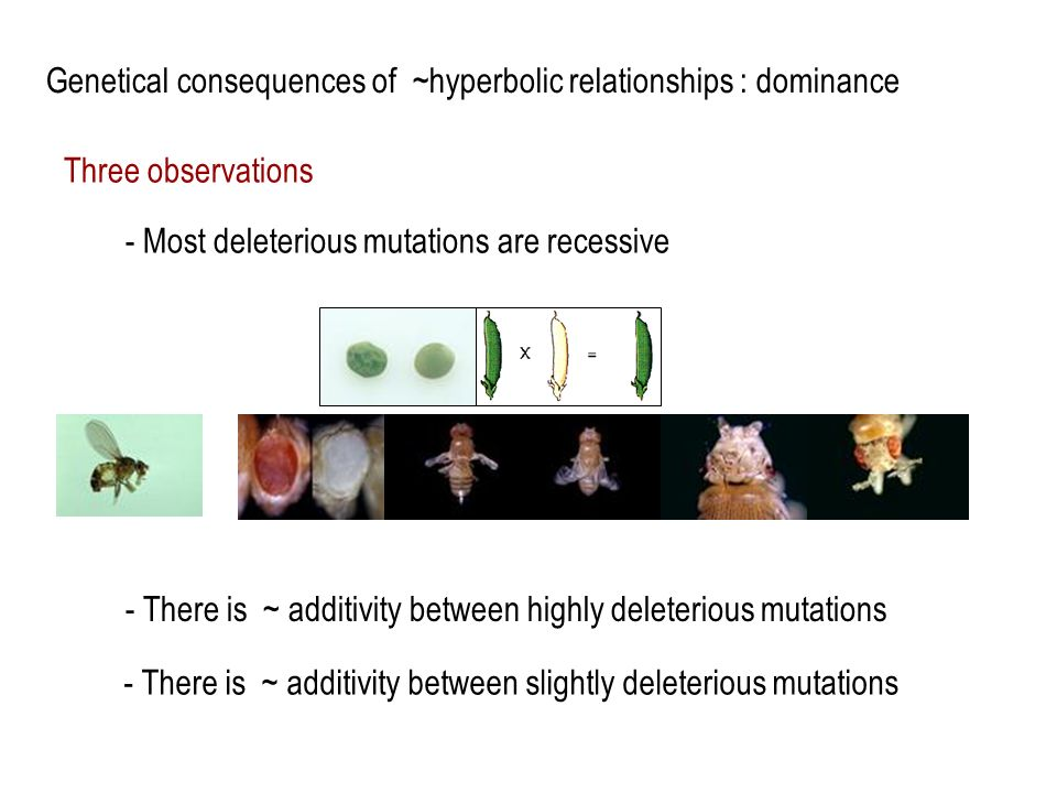 Genetical consequences of ~hyperbolic relationships : dominance