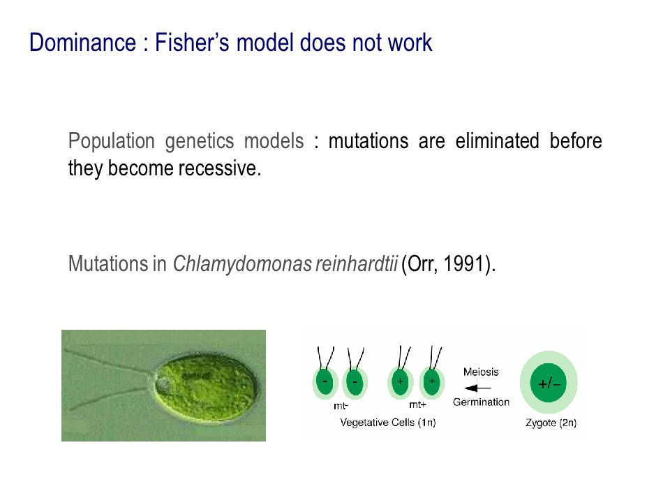 Dominance : Fisher's model does not work