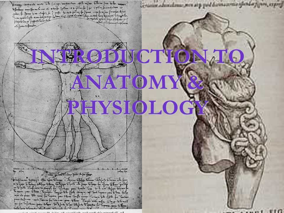 INTRODUCTION TO ANATOMY & PHYSIOLOGY - ppt download