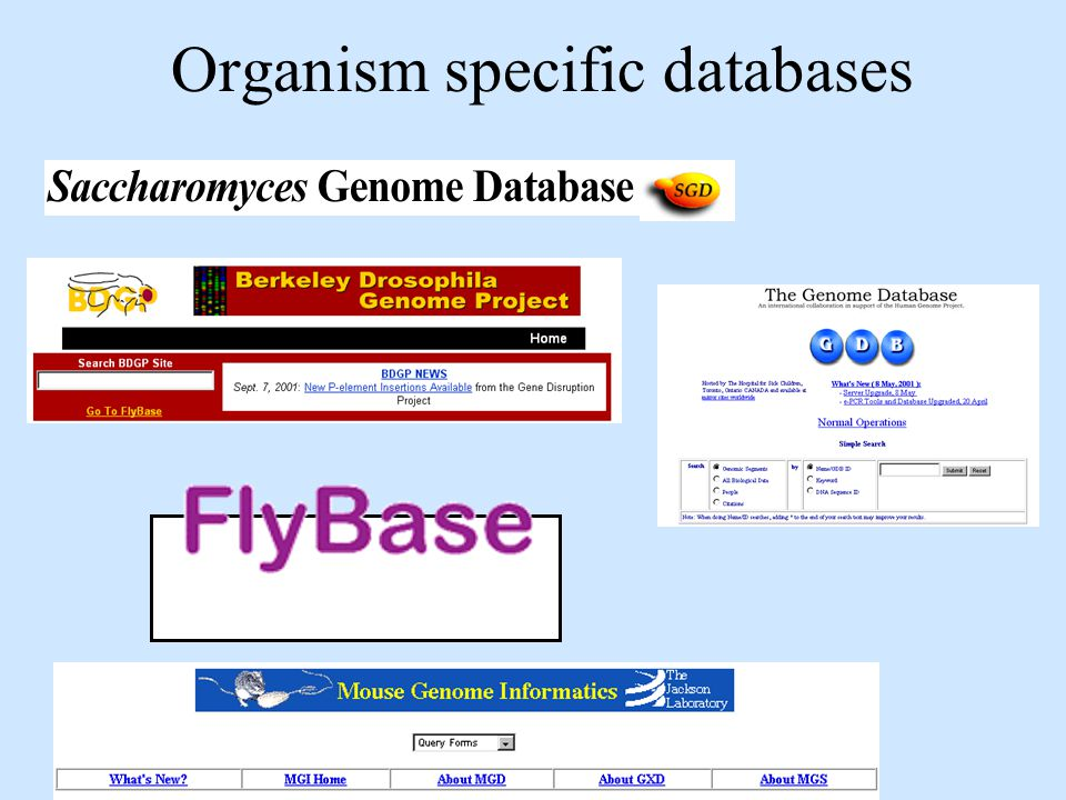 Organism specific databases