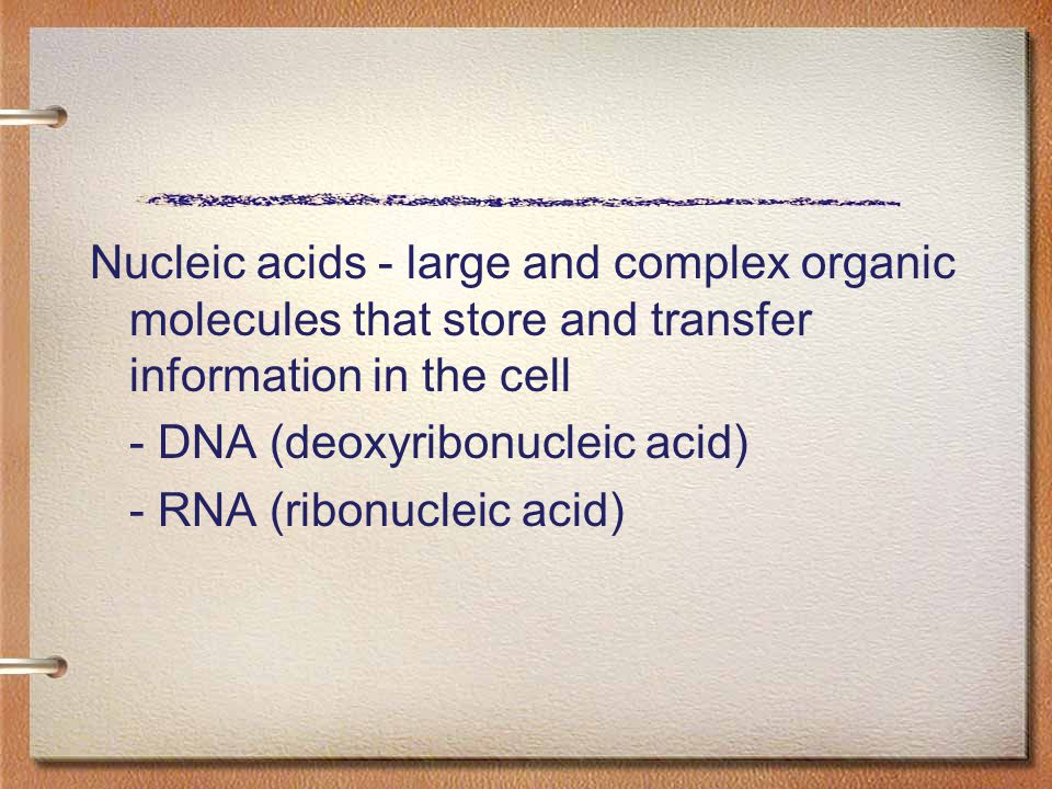 Nucleic acids - large and complex organic molecules that store and transfer information in the cell