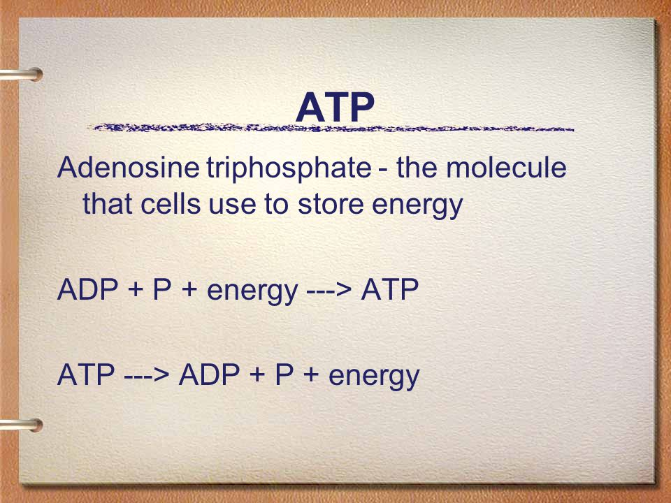 ATP Adenosine triphosphate - the molecule that cells use to store energy. ADP + P + energy ---> ATP.
