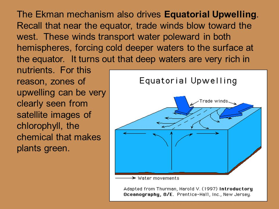 The Ekman mechanism also drives Equatorial Upwelling