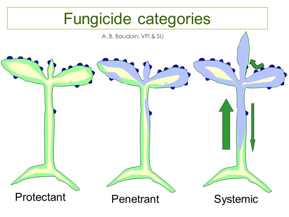 Managing Fungicide Resistance - ppt video online download