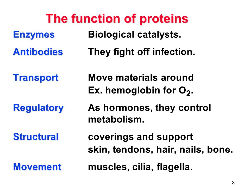 proteins the function of proteins amino acids the peptide
